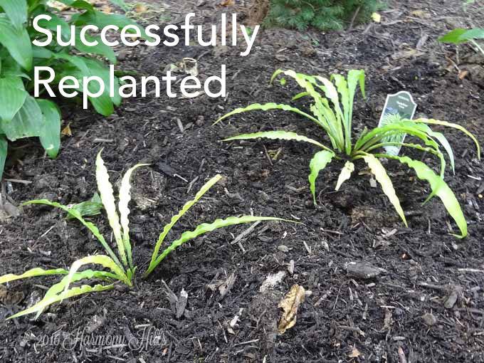 3 steps for fixing clay soil harmony hills home and garden