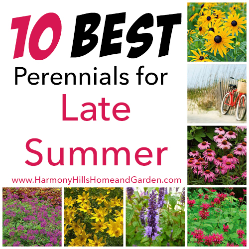 10 best perennials for late summer harmony hills home for Best flowers for backyard gardens