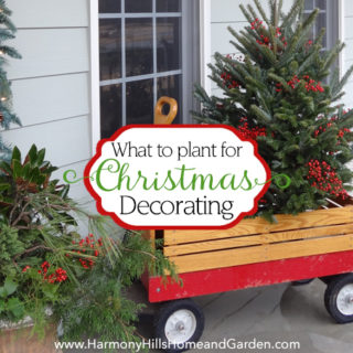 What to plant for Christmas decorating