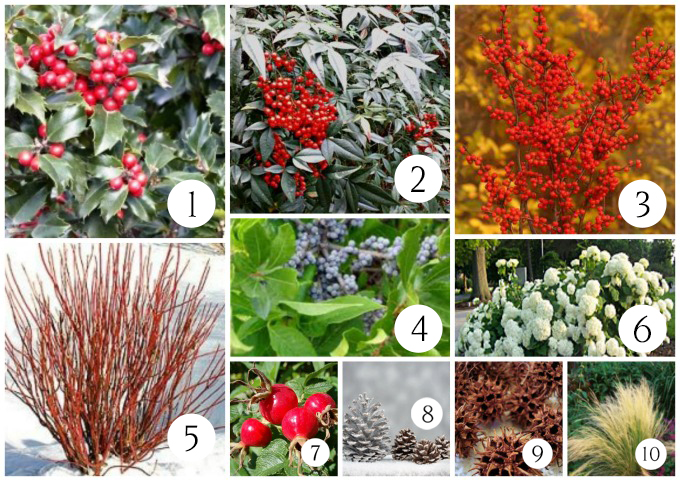 What to plant for use in Christmas decorating