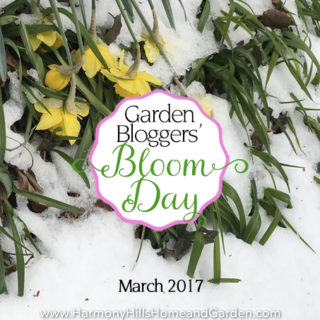 Garden Bloggers' Bloom Day – March 2017