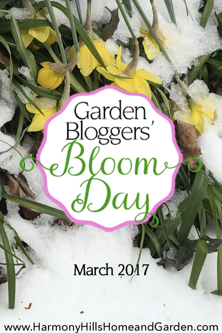Garden Bloggers' Bloom Day March 2017 at Harmony Hills Home and Garden