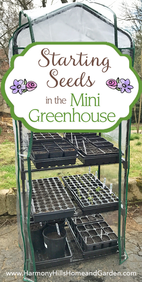 Starting Seeds in the Mini Greenhouse - getting a head start on the garden with just a small investment - www.HarmonyHillsHomeandGarden.com