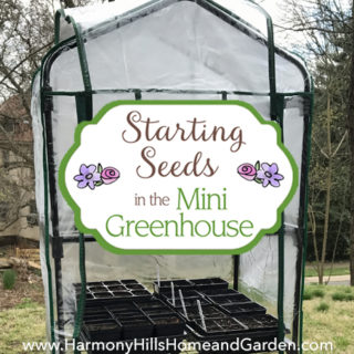 Starting Seeds in the Mini Greenhouse