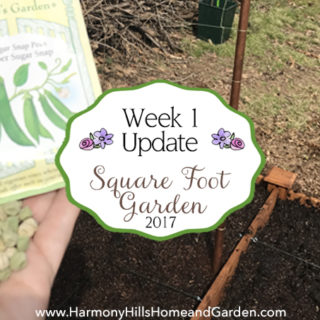 Square Foot Garden Week 1 Update