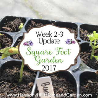 Our Square Foot Garden update, weeks 2 and 3 - www.harmonyhillshomeandgarden.com