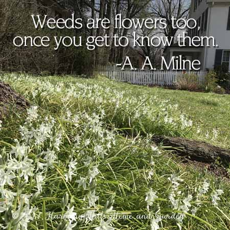 """Weeds are flowers, too, once you get to know them."" - A. A. Milne"