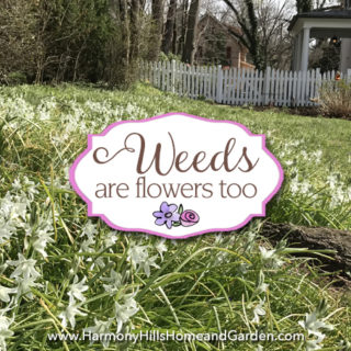 Weeds Are Flowers Too