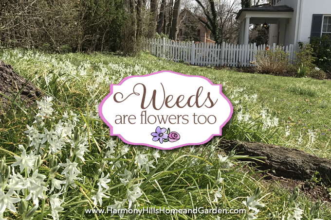 Wild Onions grow as weeds, but can be pretty too, reminding us that Weeds Are Flowers Too - www.HarmonyHillsHomeandGarden.com