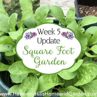 Square Foot Garden Week 5 Update