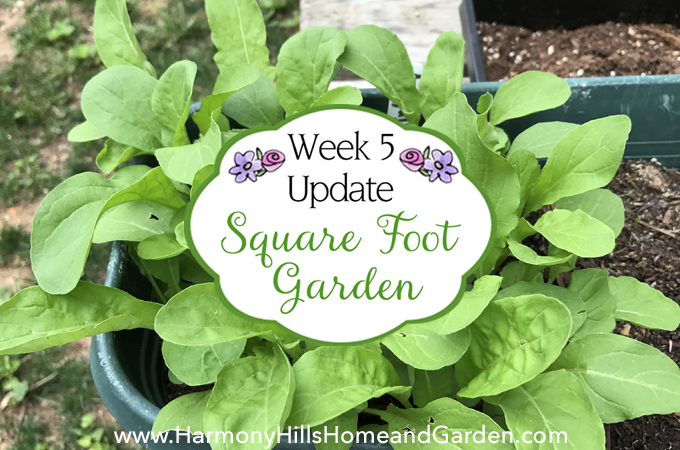 Square Foot Garden 2017 - Week 5 Update - Come see what's growing at Harmony Hills Home and Garden