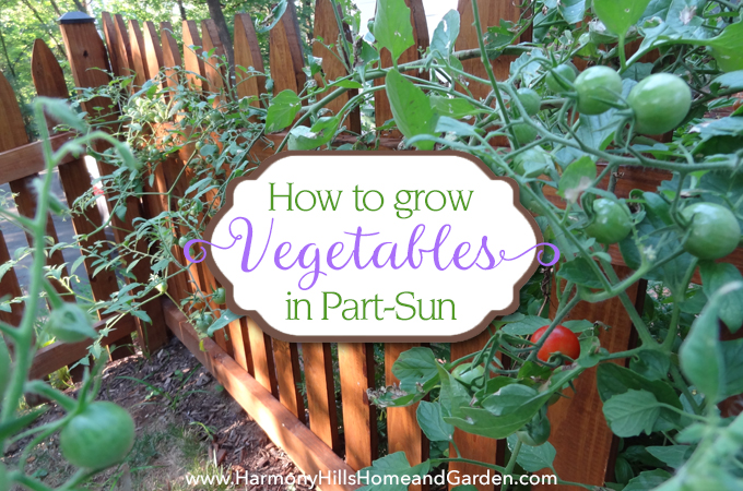 How To Grow Vegetables In Part Sun Harmony Hills Home And
